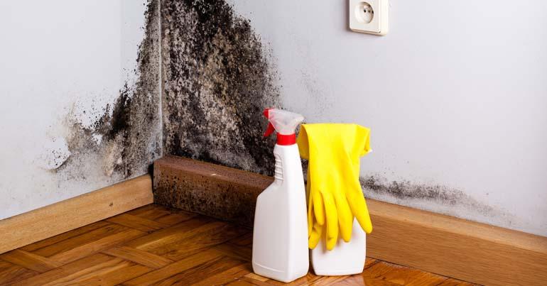 Schimmel In Huis : Huis schimmelvrij maken: 7 manieren bouwtechnische keuring